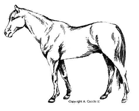 cavallo clipart cavallo clip cavalli clip