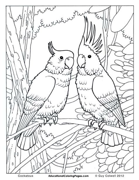 free online coloring pages for adults animals free realistic birds coloring pages