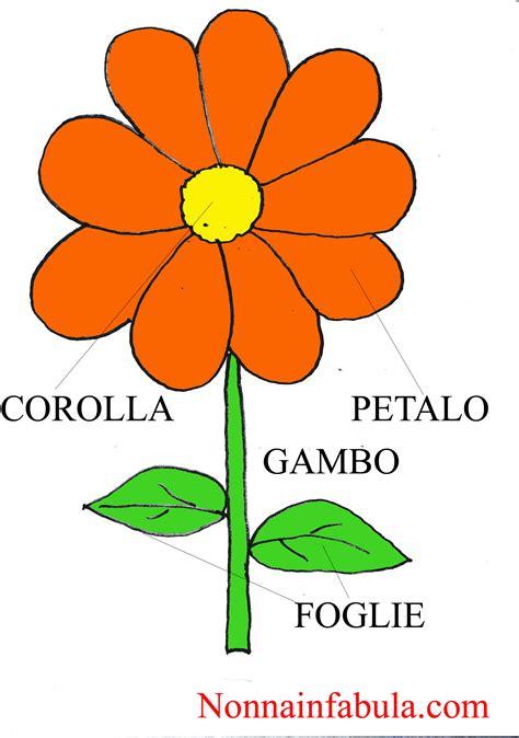 le parti fiore da colorare progetto i fiori per bambini di 3 4 anni nonna in fabula