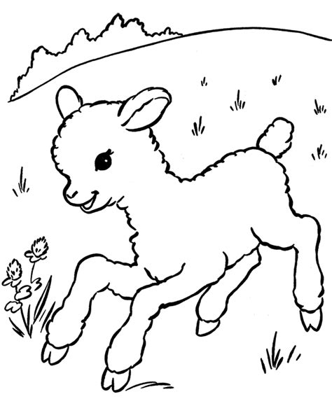 cute animal sheeps coloring pages