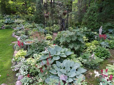 shade backyard hometalk an early july backyard shade garden walk in