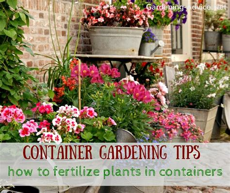 container gardening tips for beginners container gardening tips for beginners