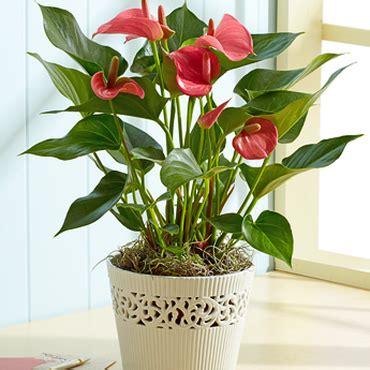 Pupuk Yang Cocok Untuk Bunga 4 tanaman hias indoor yang cocok buat menghiasi ruanganmu