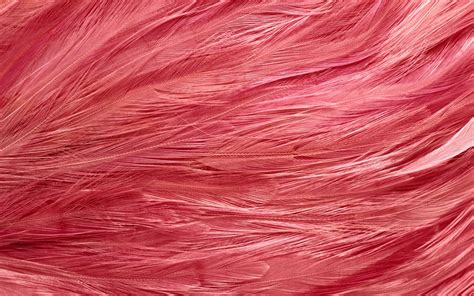 flamingo feathers wallpaper download the pink feathers wallpaper pink feathers iphone
