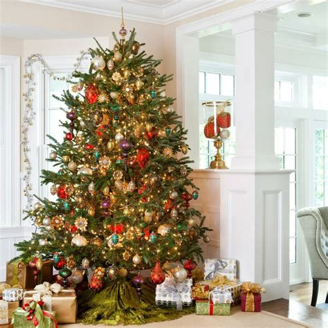 fir christmas tree ideas best 25 fraser fir tree ideas on balsam tree balsam fir