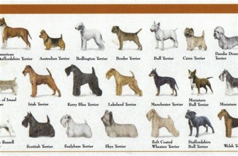 types of working dogs working breeds chart
