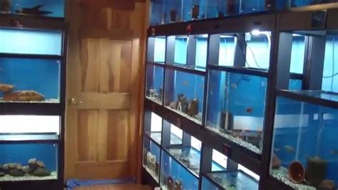 Fish Room Build by Building A Fish Room Showroom Part 6