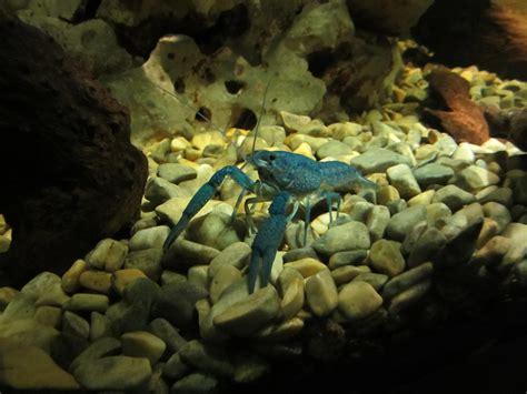 Peletpakanmakanan Ikan Laut Sera Food Marine Fish Gambar Bawah Air Kebun Binatang Makanan Laut Ikan
