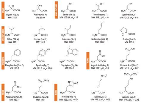 diagram of amino acid amino acid structures neb