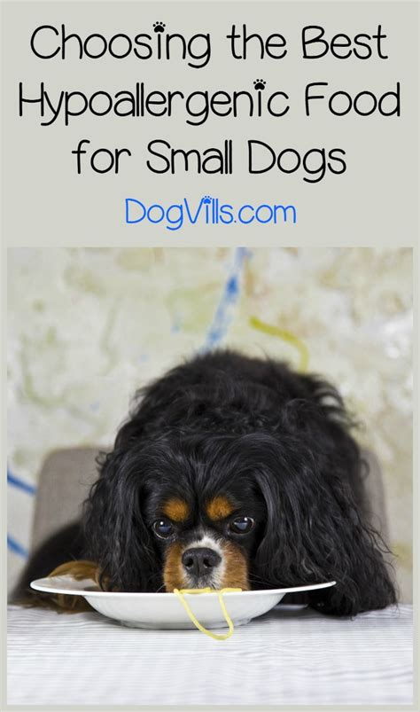 best food for small breed puppies best hypoallergenic food for small breeds