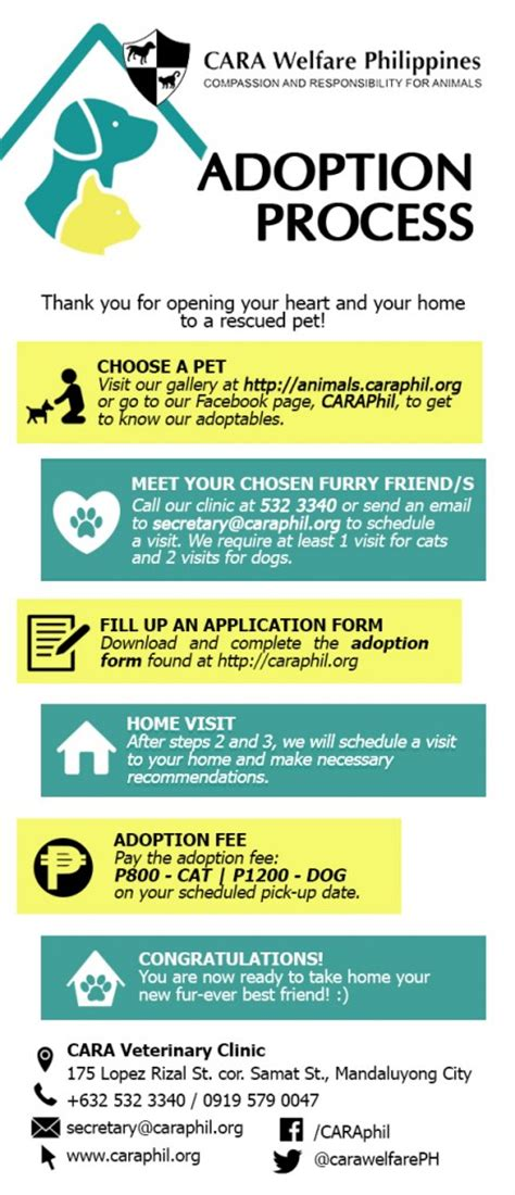 how to adopt a puppy cara welfare philippines 187 adopt a pet