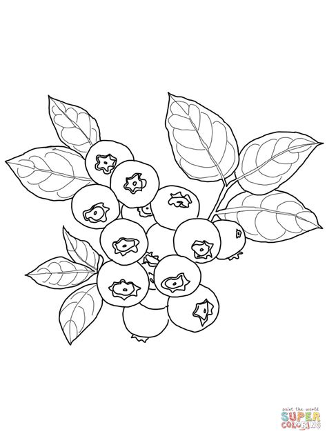blueberry coloring page supercoloring com