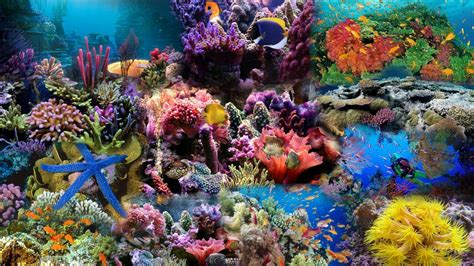 wallpaper colorful fish and interactive water coral reef wallpapers wallpaper cave