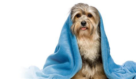what to wash a puppy with wash pacific pines gold coast