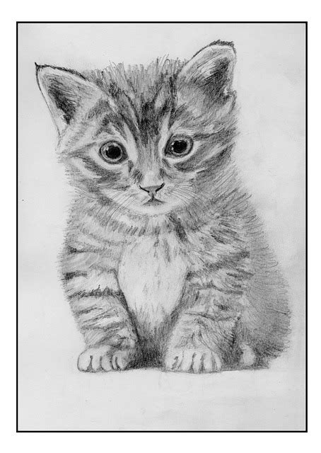 Kaos Kucing Blue Tabby Abstract free illustration cat feline drawing pencil free