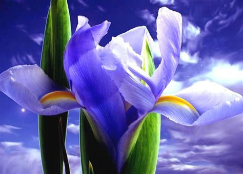 imagenes de flores extrañas y hermosas hermosas flores del color del cielo imagen 3519