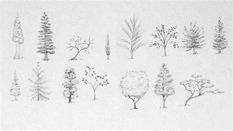 tree sketches google search art gt pencil pinterest