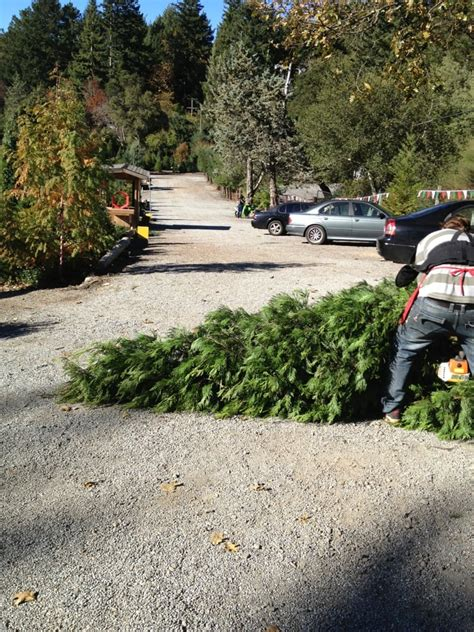friends tree being cut sized yelp