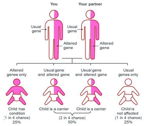 sickle cell diagram diagram of a sickle cell images how to guide and refrence