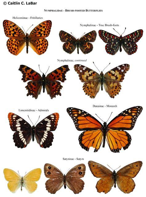 species name northwest butterflies naming lepidoptera