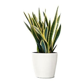air purifying plants  improve indoor air quality