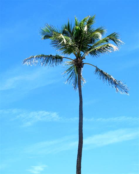 file tropical palm tree jpg