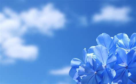 sfondo fiori sfondi e wallpaper desktop fiori sfondi fiori azzurri