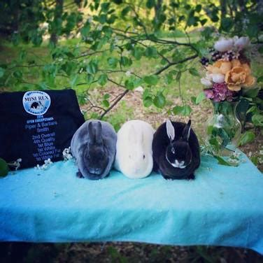 Www Sweepstakes Result - sweepstakes results briallu rabbitry mini rex florida whites and satins