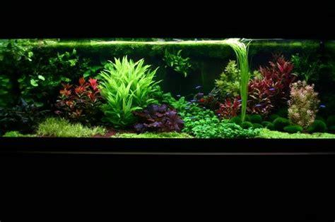 aquascape plant 17 best images about dutch aquarium on pinterest natural