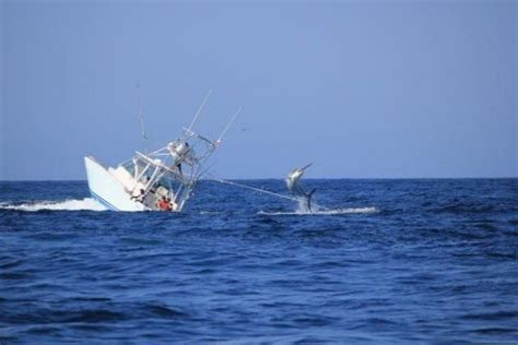 deep sea fishing boat sank moby dick 2 0 black marlin sinks fishing boat off the