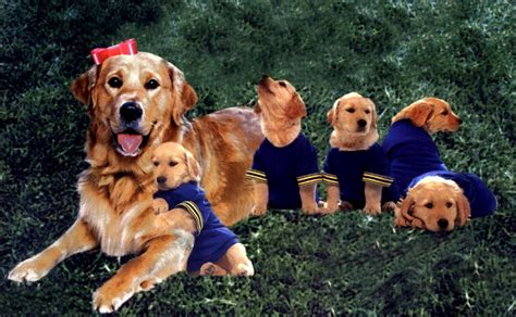 air bud air bud photos air bud images ravepad the place to about anything and