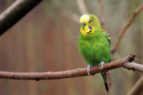 wallpaper green parrot green parrot hd wallpaper hd wallpaper background