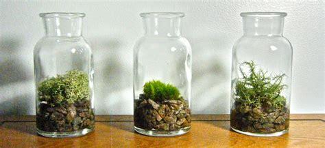 vintage glass bottle plant vase or moss terrarium