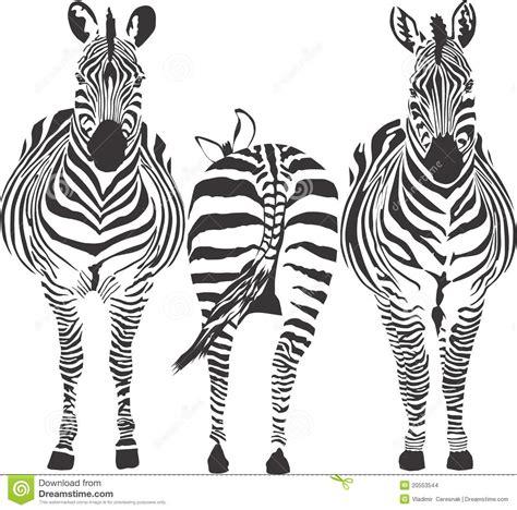 zebras vector illustration stock images image