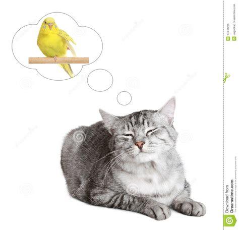 Cat Dreams Of Fish Birds Milk cat dreams of a bird stock image image 14441225