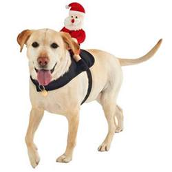 Image Gallery Liverpool Echo christmas outfits for your pets liverpool echo