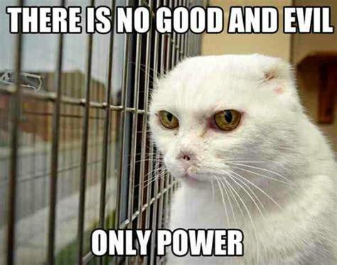 Evil Cat Meme - evil cat cat and kitten memes pinterest