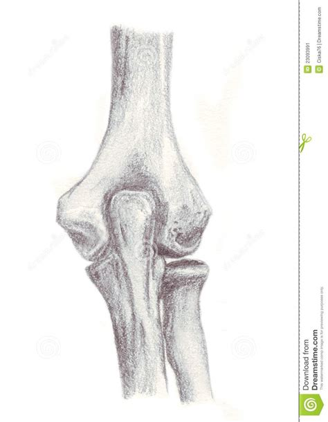 sketchbook joint human anatomy bones of the stock image image
