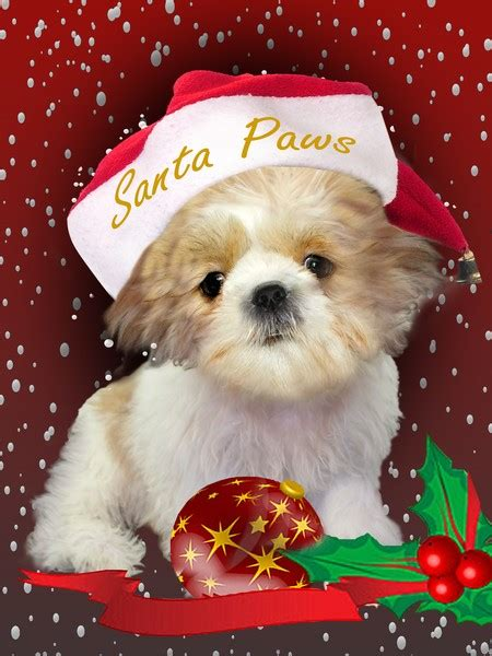 shih tzu paws shih tzu santa paws by reed artwanted