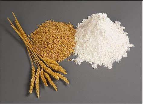 w proteine farina farina e il suo indicatore di forza w informazioni utili