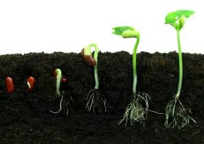 how do seeds sprout wonderopolis