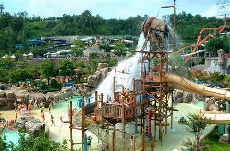 theme park zoo zoo korea everland kyonggi do south korea tourist destinations