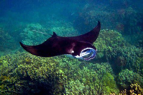 Mba Tours Kuta by Image Gallery Nusa Dua Snorkeling