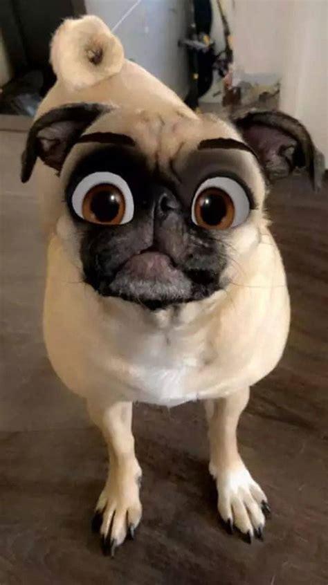 snapchat filter  turn  dog   disney character barnorama