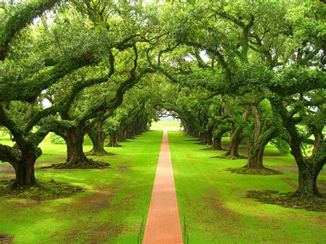 trees path green
