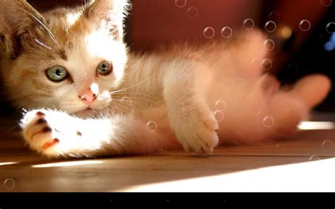wallpaper lazy cat lazy cat live wallpaper android apps on google play
