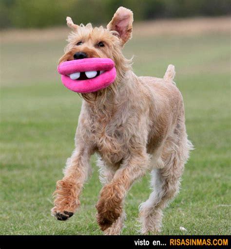 mujer se pega con perro perro se pega con una mujer new style for 2016 2017
