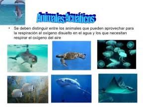 100 ejemplos de animales terrestres y acuticos animales acu 225 ticos terrestres y aereos male y caty