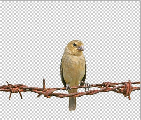 remove background shadows in photoshop using apply image psdesire
