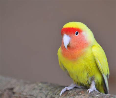 images of love birds in rain love birds